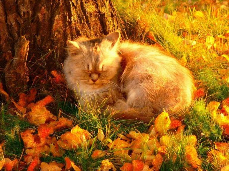 Осінь ще потішить волинян приємними