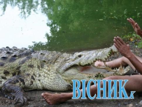 Сонник о зубастых: к чему снится крокодил?